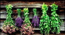 Ημερίδα βιολογικής καλλιέργειας αρωματικών-φαρμακευτικών φυτών του ΚΠΕ Θέρμου.